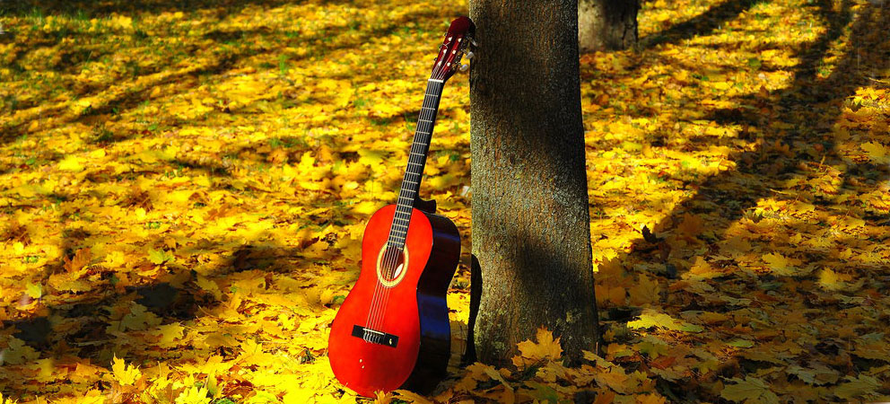 chitarra classica foresta